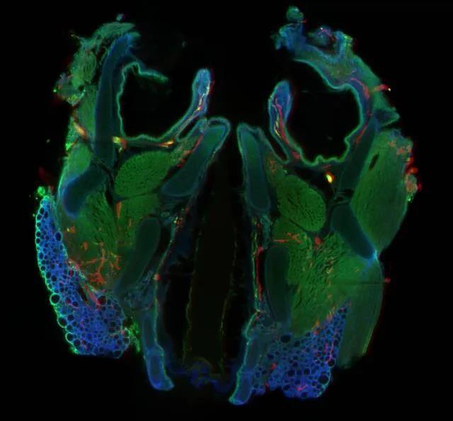 蔡司激光扫描显微镜